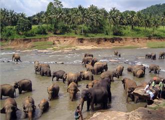 पिन्नावाला ने धार्मिक स्थानों को हाथीसौंपने की अनुमति दे दी