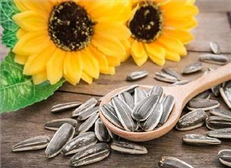 स्वास्थ्य के लिए बेहद फायदेमंद हैं सूरजमुखी के बीज