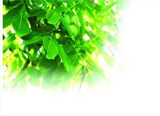विचित्र है पेड़-पौधों की सामाजिक दुनिया