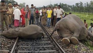 ट्रेनसे टकराकर दो हाथियों ने दम तोड़ा