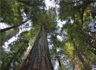 अजनबी पेड़ों की पहचान का आधार पत्ती कुंजी