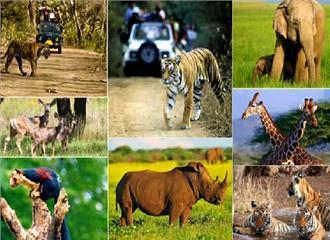 वन्य जीवों की मौतों पर लगी लगाम