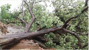 मिर्जापुर में पेड गिरने से बच्ची की मौत