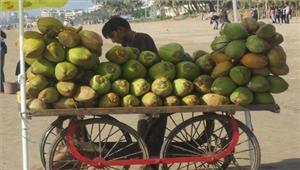 कर्नाटक मेंसूखे के कारण नारियल का उत्पादन प्रभावित