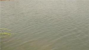 तालाब में मिला एक अज्ञात व्यक्ति का शव